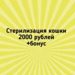ivPE9zHCKO8